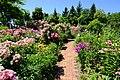 ロイズコンフェクト ローズガーデン(Royce' Confect Rose Garden) - panoramio.jpg
