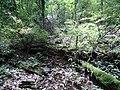 原始森林里腐烂的树木 - panoramio.jpg