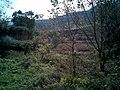小路对面的风景 - panoramio.jpg