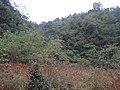 徐家湾的沼泽地 - panoramio.jpg