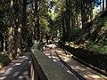 森林铁路 - Forest Railway - 2012.02 - panoramio.jpg