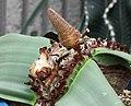 百歲蘭-雌花 Welwitschia mirabilis -日本大阪鮮花競放館 Osaka Sakuya Konohana Kan, Japan- (41485199814).jpg