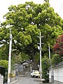 石神社02.jpg