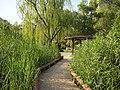 芦苇 - Reeds - 2011.06 - panoramio.jpg