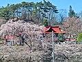 蛇の鼻御殿 桜の季節.jpg