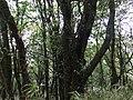 贵州-梵净山-4000梯处原始森林 - panoramio.jpg