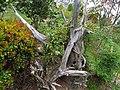 野馬瞰步道 Yemakan Trail - panoramio (5).jpg