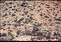 018 Grand Canyon Aerial of Burro Damage 1975 (4951583271).jpg