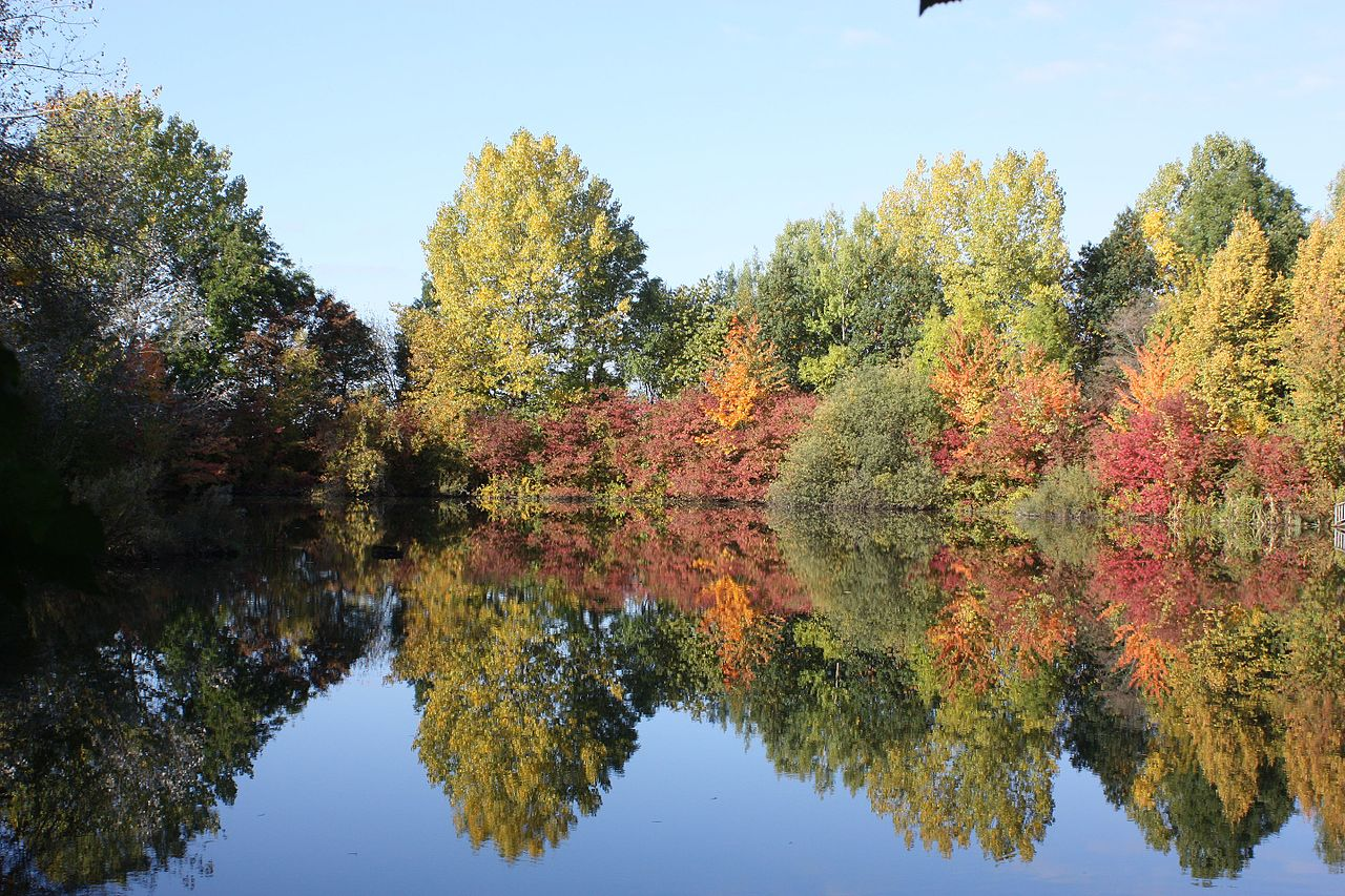 File 03 1 herbst in ohlhof 23 10 wikimedia commons for Boden preview herbst 2016