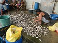 0332jfPanasahan Fishes City of Malolos Bulacan Fishportfvf 11.jpg
