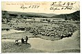 08405-Lewiston, Idaho-1906-Sheep Ranch on Snake River-Brück & Sohn Kunstverlag.jpg
