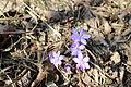 108 Bacín nové kytky v lese.JPG