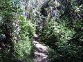 11. Camino Cerro.jpg