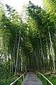 170923 Kodaiji Kyoto Japan40n.jpg