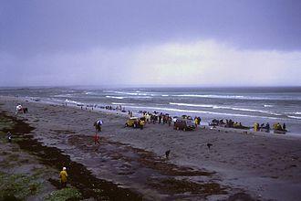 Augusta, Western Australia - The Town Beach whale stranding, 1986.