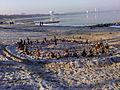 2011-01 Timmendorfer Strand Versammlung der Steinmännchen.jpg