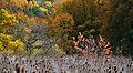 2011-10-26 13-48-49 Switzerland Kanton Schaffhausen Büttenhardt.jpg