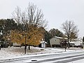 2018-11-15 09 10 31 A snow and sleet covered Sugar Maple and Red Maple along Allness Lane between Kinross Circle and Dairy Lou Drive in the Chantilly Highlands section of Oak Hill, Fairfax County, Virginia.jpg