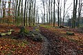 20191228 Hike Ratingen and its surroundings. 10.jpg