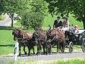 21te Rammenauer Schlossrundfahrt der Pferdegespanne (134).jpg
