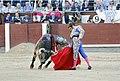 27-5-2015, Morante-Trinchera.jpg