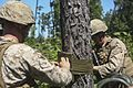 2nd CEB brings down trees during demolition range 150814-M-DT430-089.jpg