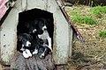 4兄弟 brothers - panoramio.jpg