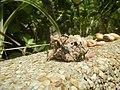 4217Foods Common houseflies Ants of the Philippines 30.jpg