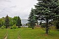 46-106-5007 Drohobych Spruces RB 18.jpg