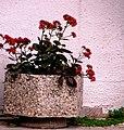 A@a my garden - panoramio (11).jpg