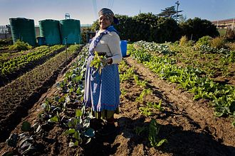 Vegetable - Growing vegetables in South Africa