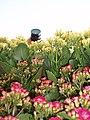 A Camera on Flowers.JPG