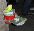 A budgerigar in Shiraz.jpg