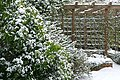 A suburban garden in winter - geograph.org.uk - 1144876.jpg