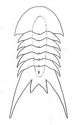 Aaveqaspis drawing.jpg