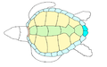 Ab reptile 06scutes coloured.png