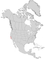 Abies bracteata range map 0.png