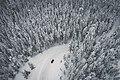 Above the frozen forest (Unsplash).jpg