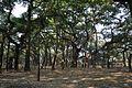 Acharya Jagadish Chandra Bose Indian Botanic Garden - Howrah 2011-01-08 9722.JPG