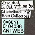 Acromyrmex versicolor casent0104036 label 1.jpg