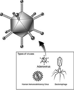 Adenovirus NIH
