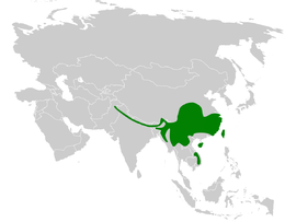Aegithalos concinnus distribution map.png