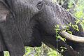 Africa Safari 021 (5315644444).jpg