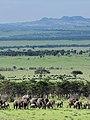 African Elephant (3075422483).jpg