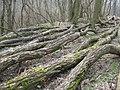 Akazien Parcours - panoramio.jpg