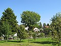 Alberteiche Weißig Sommer (5).jpg
