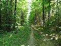 Allée du Camp de Jules César (forêt de Montmorency) - panoramio - Eric Bajart.jpg