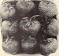 Allen's 1956 book of berries (1956) (17947829412).jpg