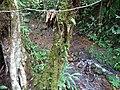 Along the Red Trail - Finca Esperanza Verde - Near Matagalpa - Nicaragua - 06 (31687176465).jpg