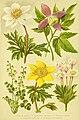 Alpen-Flora für Touristen und Pflanzenfreunde (Pl. 01) (6021498419).jpg